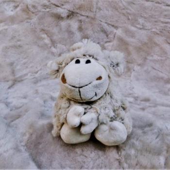 Schaf Sitzend